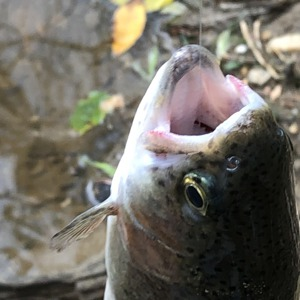 Image #3674 from GreatAnglers.com