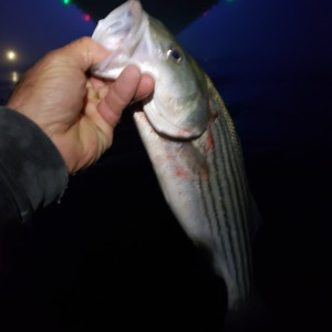 Image #4386 from GreatAnglers.com