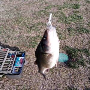 Image #5879 from GreatAnglers.com