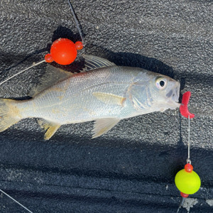 Image #6453 from GreatAnglers.com