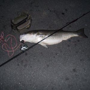 Image #822 from GreatAnglers.com