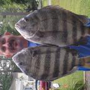 Image #830 from GreatAnglers.com